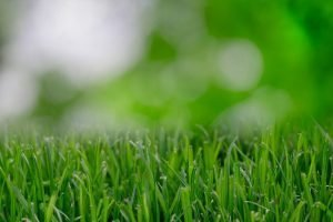 Ceolitas – vejos įrengimo drenažinė medžiaga, substratas ir dirvos kondicionierius